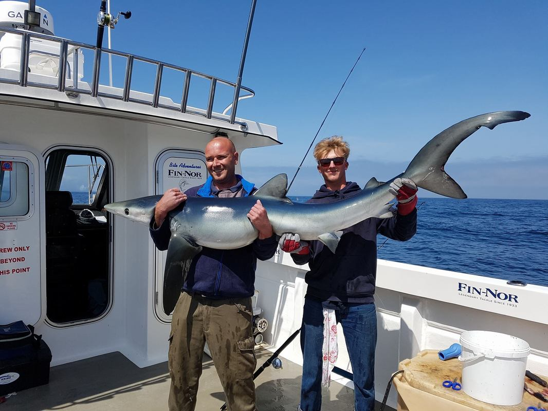 Blue Shark Fishing Penzance 2017